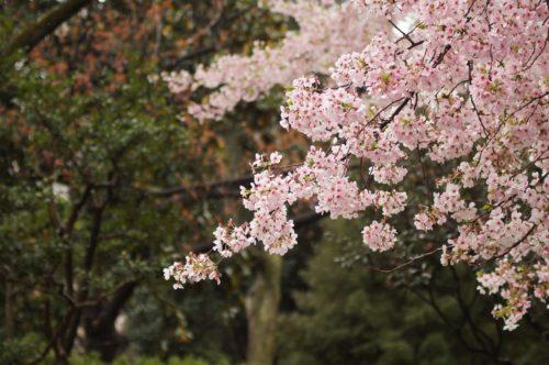 春の虫パターンって存在するの?春こそ虫系ルアーをつかうべし!