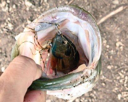 釣った魚に刺さったフックが取れないときはどうする?!迷わずカエシを潰そう!
